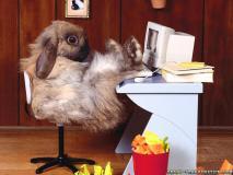 funny-wallpapers-rabbit-at-work.jpg