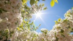 pomlad1.jpg