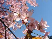 pomlad.jpg