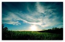 sunny-day-summer-t2-Mobile.jpg